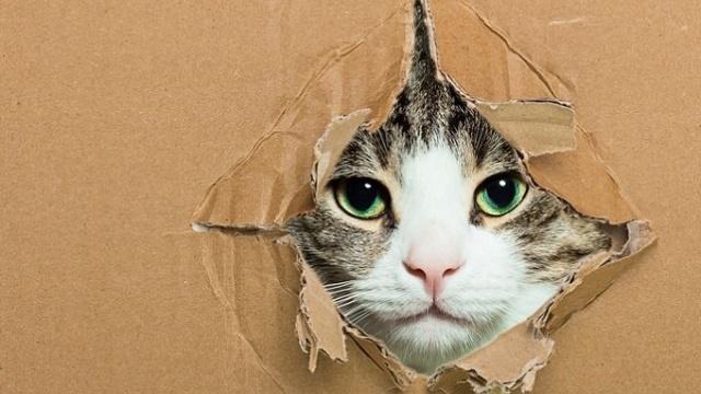 为人类表情包做出贡献的猫,不只有薛定谔的猫