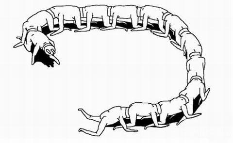 插头人体蜈蚣
