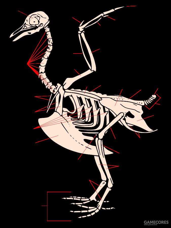 肱骨21 尺骨22 桡骨23