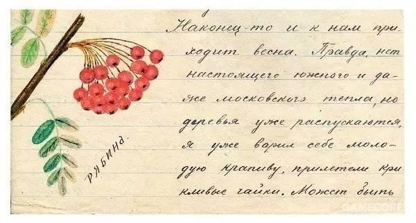 苏联学者范根海姆在集中营中为女儿绘制的植物插画