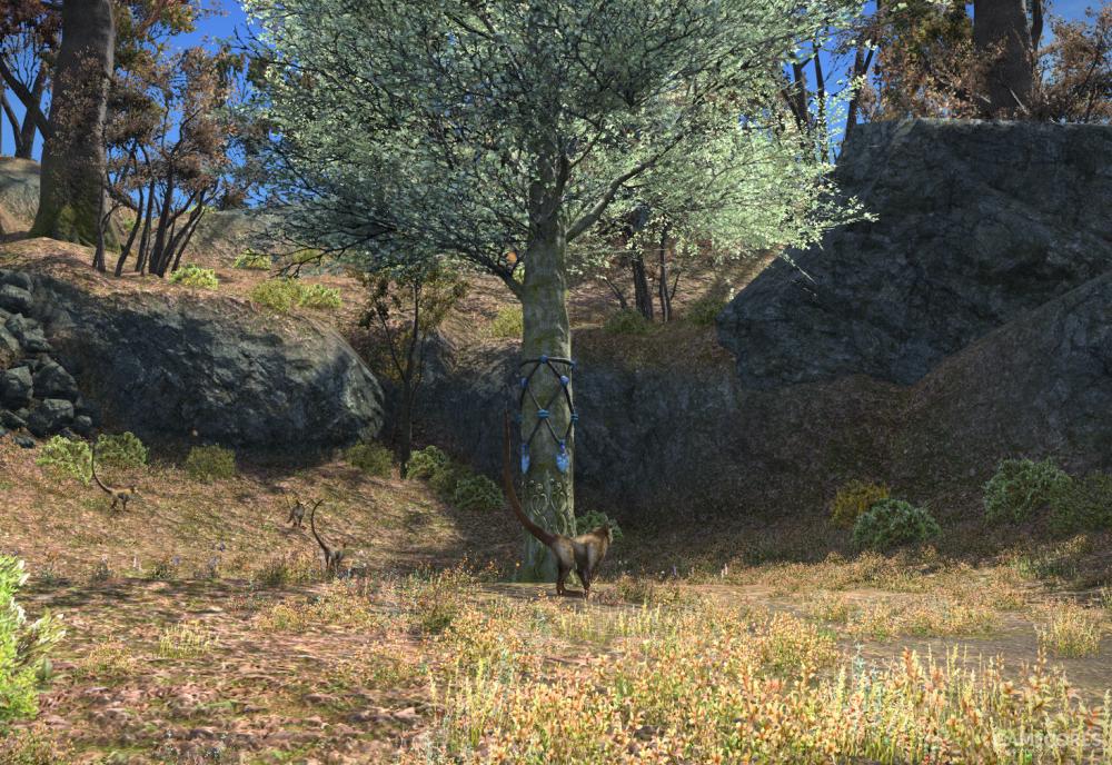 位于和平苑的境树,境树是元灵守护的树木,在每一片林区都有一颗境树,其上有元灵施加的结界,给这片区域提供庇护