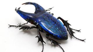 昆虫警告 | Wesley Fleming 与玻璃昆虫制品