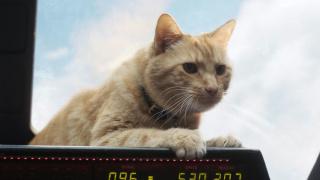 看完《惊奇队长》《夏目友人帐》才明白,撸猫真的停不下来
