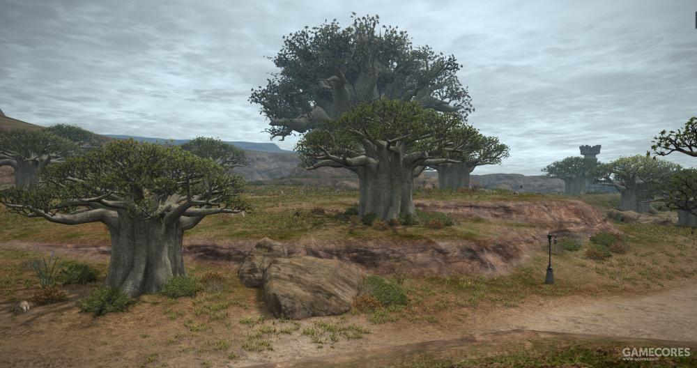 据说这里曾经遍布仙人掌,但是现在这里只剩下了霸王树,所以它的名字变成了无刺盆地,最远处最大的那颗树便是著名的大霸王树