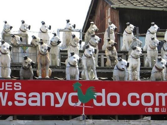 当你走在街上,被近百只尼帕犬同时盯着是一种怎样的体验?