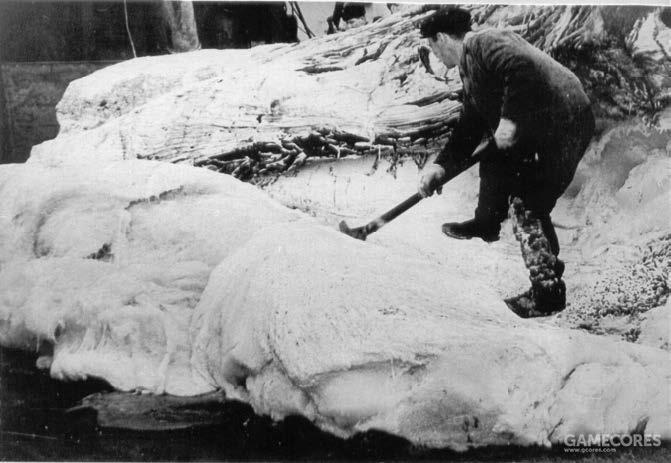 船员正在处理抹香鲸的头部