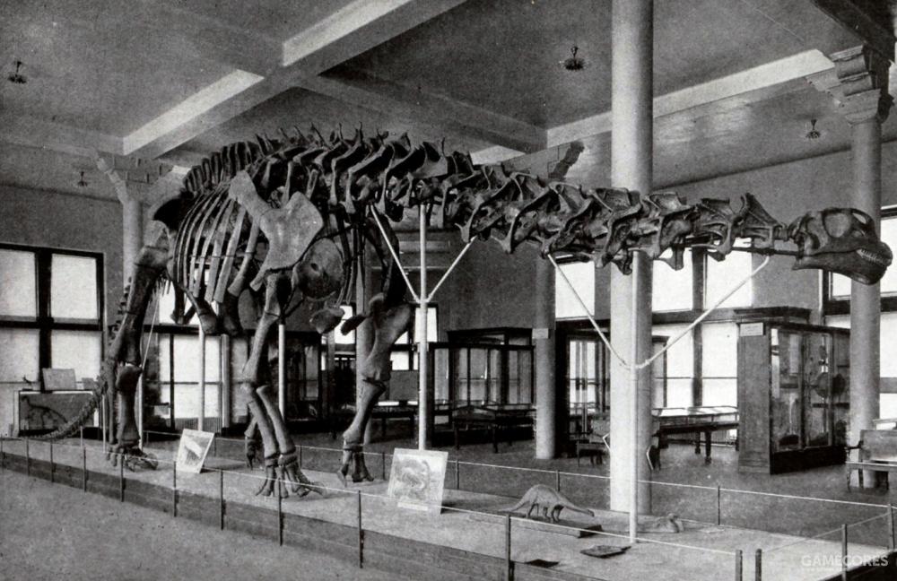 1905年在美国自然力历史博物馆展出的AMNH460骨骼化石