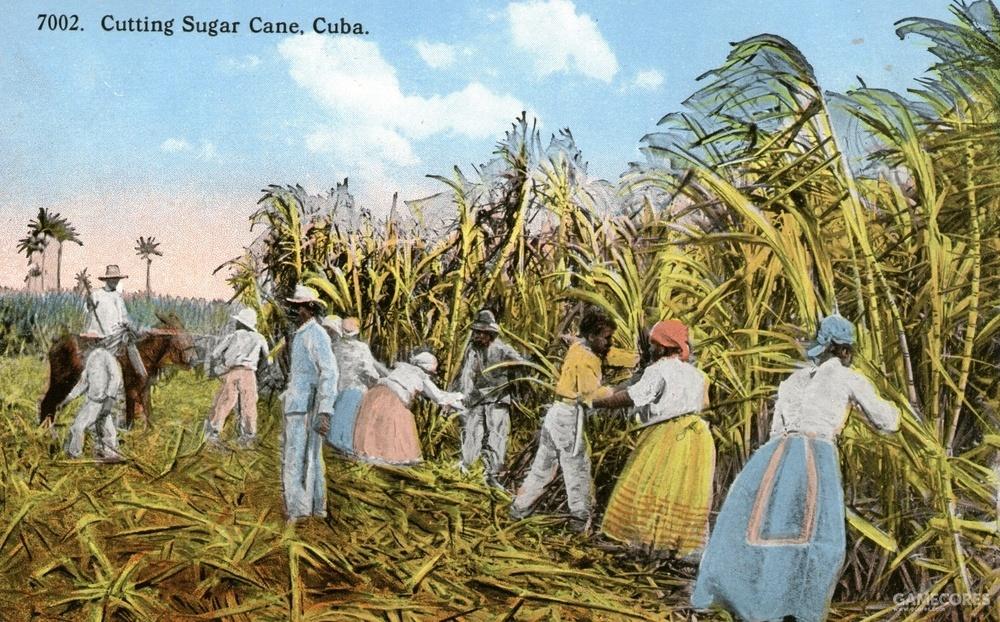 从被殖民开始 古巴就成布满了甘蔗种植园