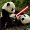 熊猫游戏字幕组