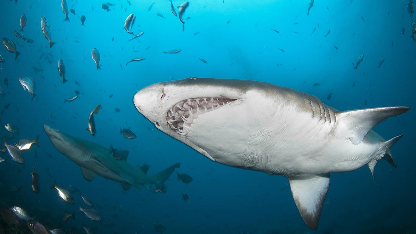 猛鯊進魚缸:養鯊魚和看鯊魚的不完整指南