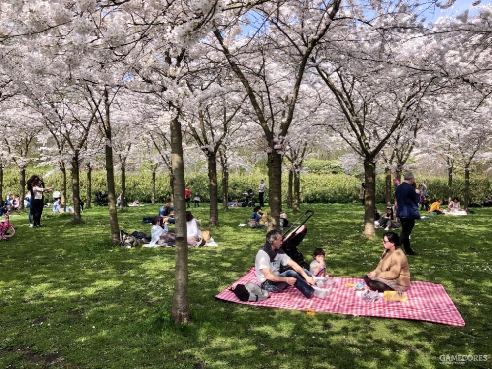 赏樱时人们使用的地毯,作为最简单的空间界定工具,同时将人们置于自然的变化和流动之中