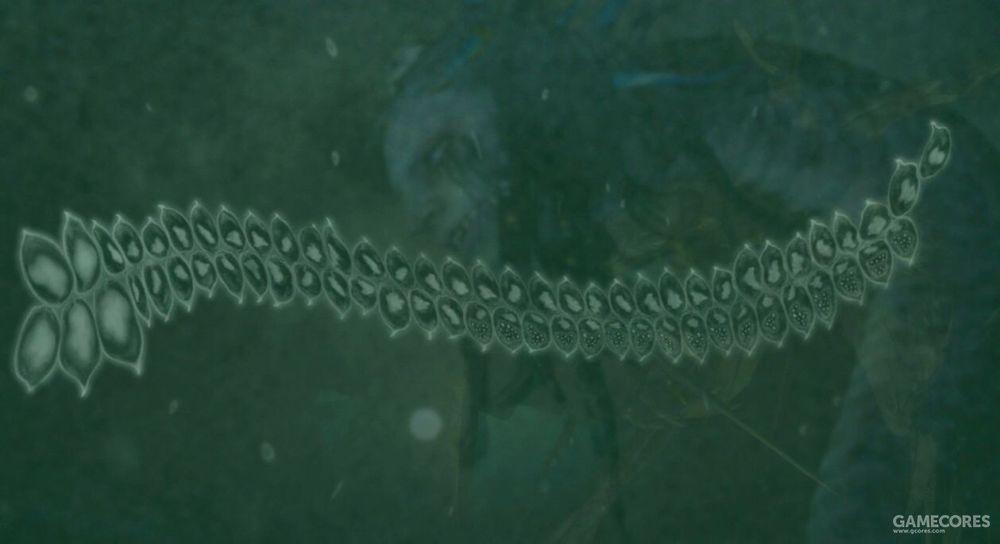 使骸是一种寄生虫的变异体