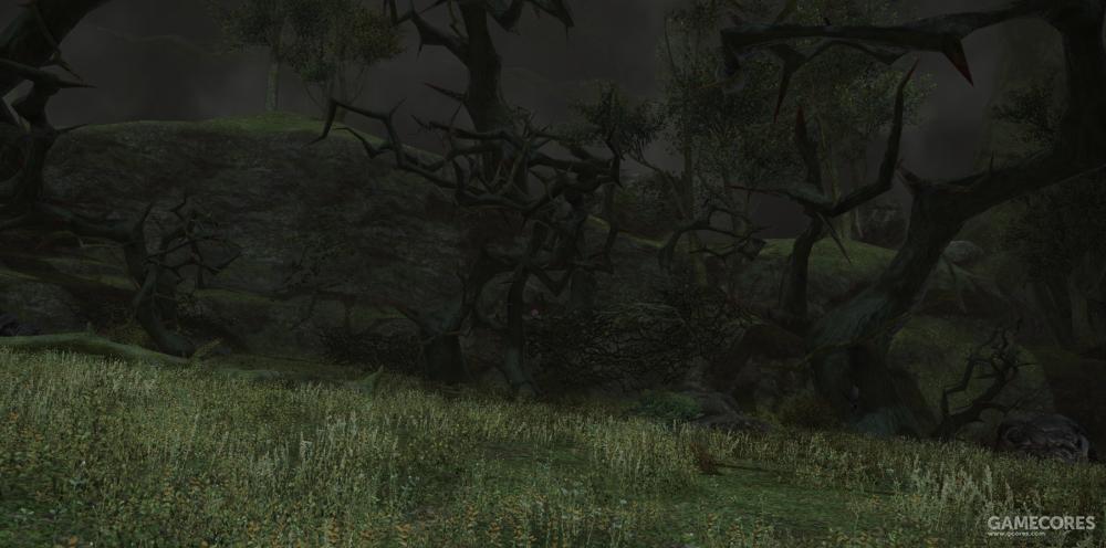 向北是有独特树种荆棘树丛生的荆棘森,荆棘森的深处是十二神大圣堂