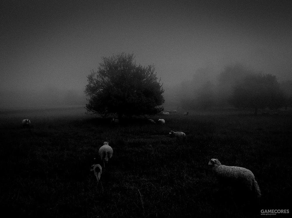 摄影师:Sukru Mehmet Omur