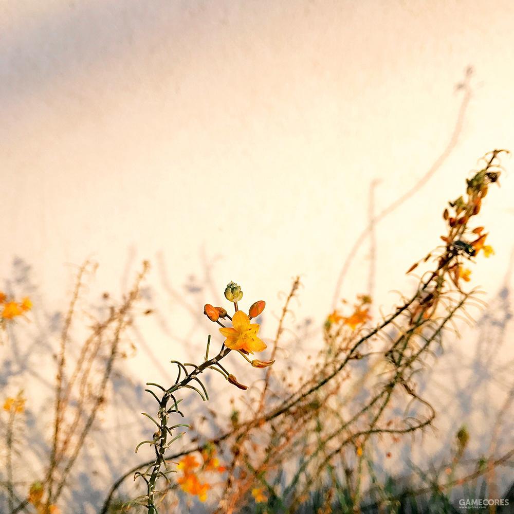 摄影师:Alison Helena