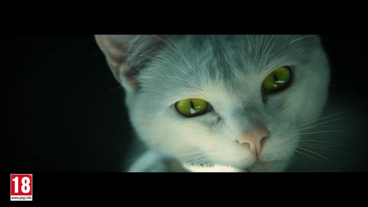 把特種部隊和貓放在一起做個宣傳片,效果挺好