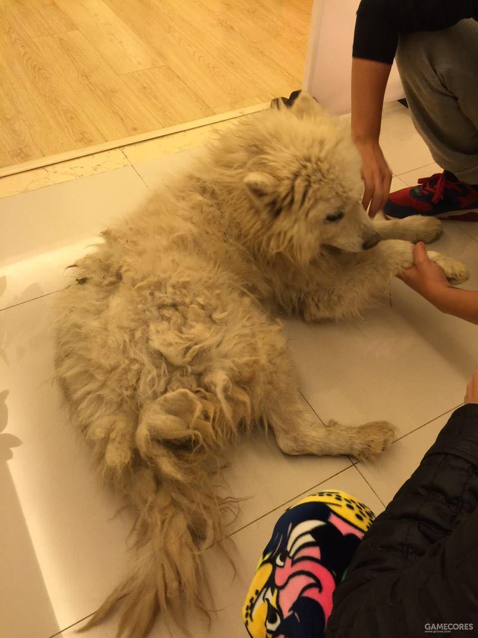 他叫汤圆,是一条从救助站领养回来的狗子~