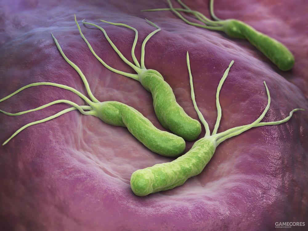 寄生在胃部的幽门螺杆菌,是大部分胃溃疡的罪魁祸首,却长期不为人所知