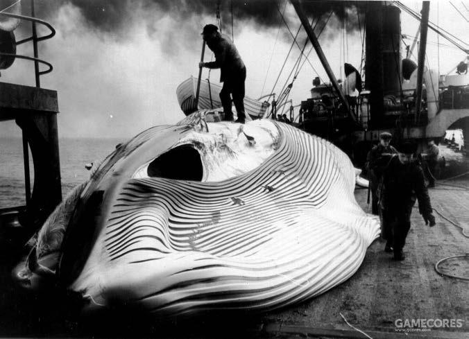 """1958年,""""""""阿留申号的船员正在处理一头庞大的长须鲸"""