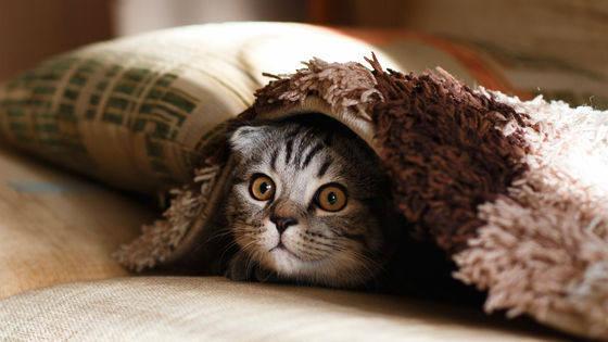 喜欢猫的大多都是无神论者?美国学者发表相关论文